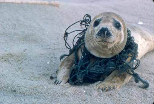 Image result for pollution in ocean
