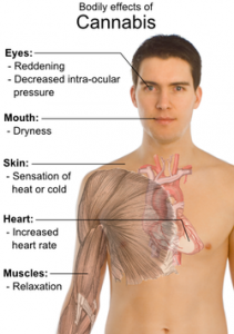 Bodily_effects_of_cannabis