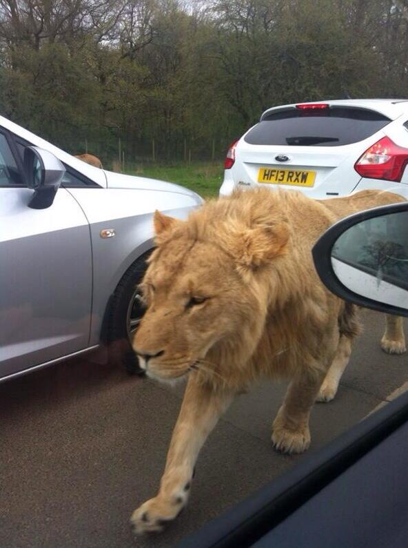 Who+is+Responsible+When+Lions+Escape%3F