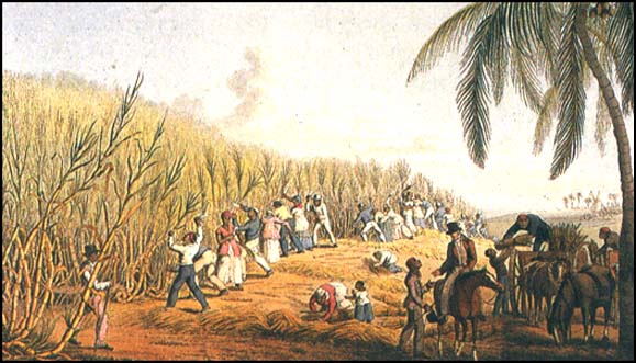 Image result for haiti sugar plantations
