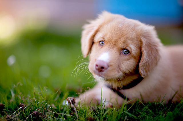 My+Best+Pet