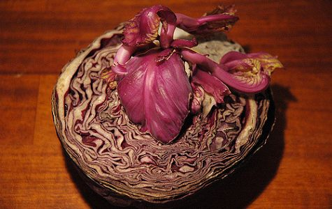 Photo of red cabbage