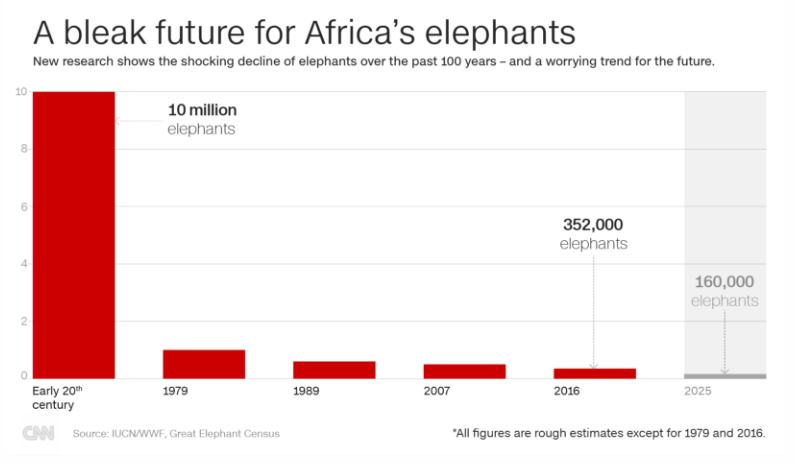 Image result for a bleak future for africa's elephants