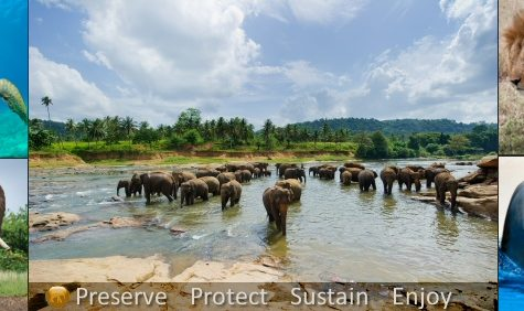 Elephant Population Decreasing Rapidly
