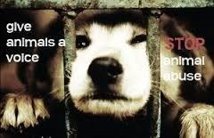 Their Fight is Our Fight: Animal Cruelty