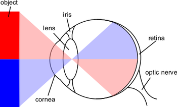 English: Diagram of the eye that I made with s...