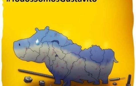 Gustavito the hippopotamus