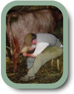 hand-milking-a-cow-2007