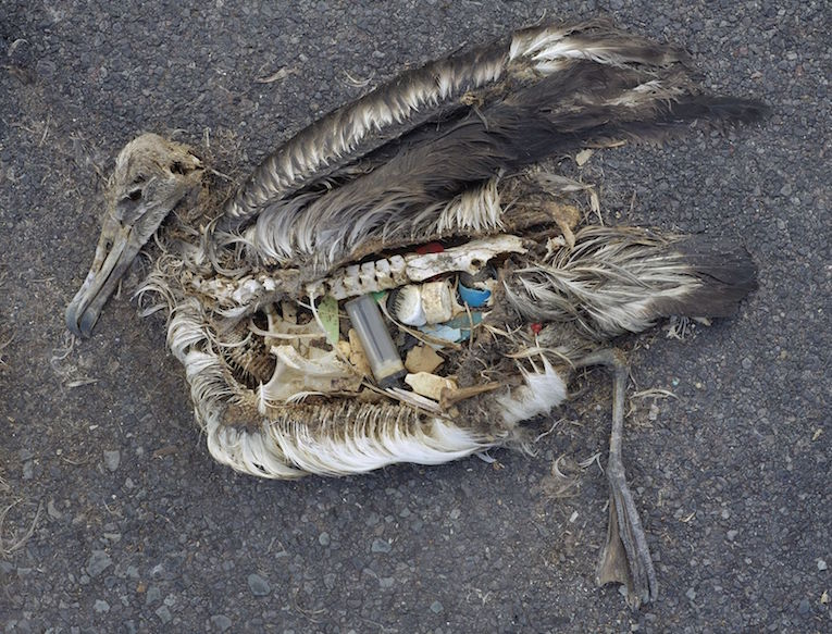 The-Plastic-Impact-on-Birds