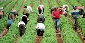 Migrant Farm Workers Are the Backbone of the Agricultural Industry