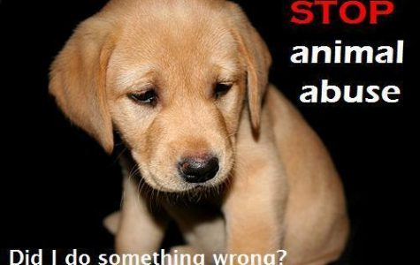 stop violence against animals.
