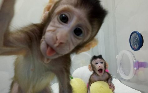 Monkeys cloned in China, what does this mean for the future?