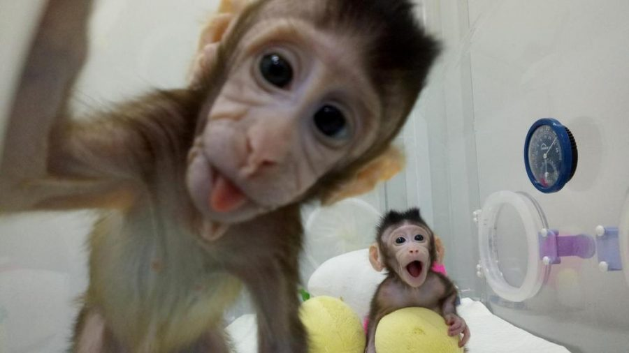 Monkeys+cloned+in+China%2C+what+does+this+mean+for+the+future%3F