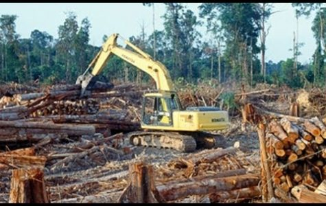 Preserving the rain-forest is important for climate action.