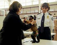 Animal Service Worker