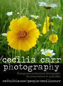 ceciliacarrphotography ad
