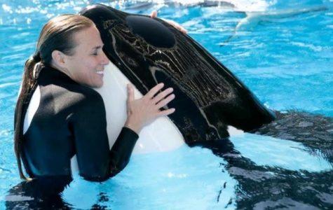 Ban orca shows at SeaWorld